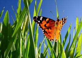 Flora en faunawet